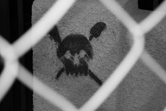 PIC OF SKULL SHOWING THROUGH CHAIN LINK FENCE